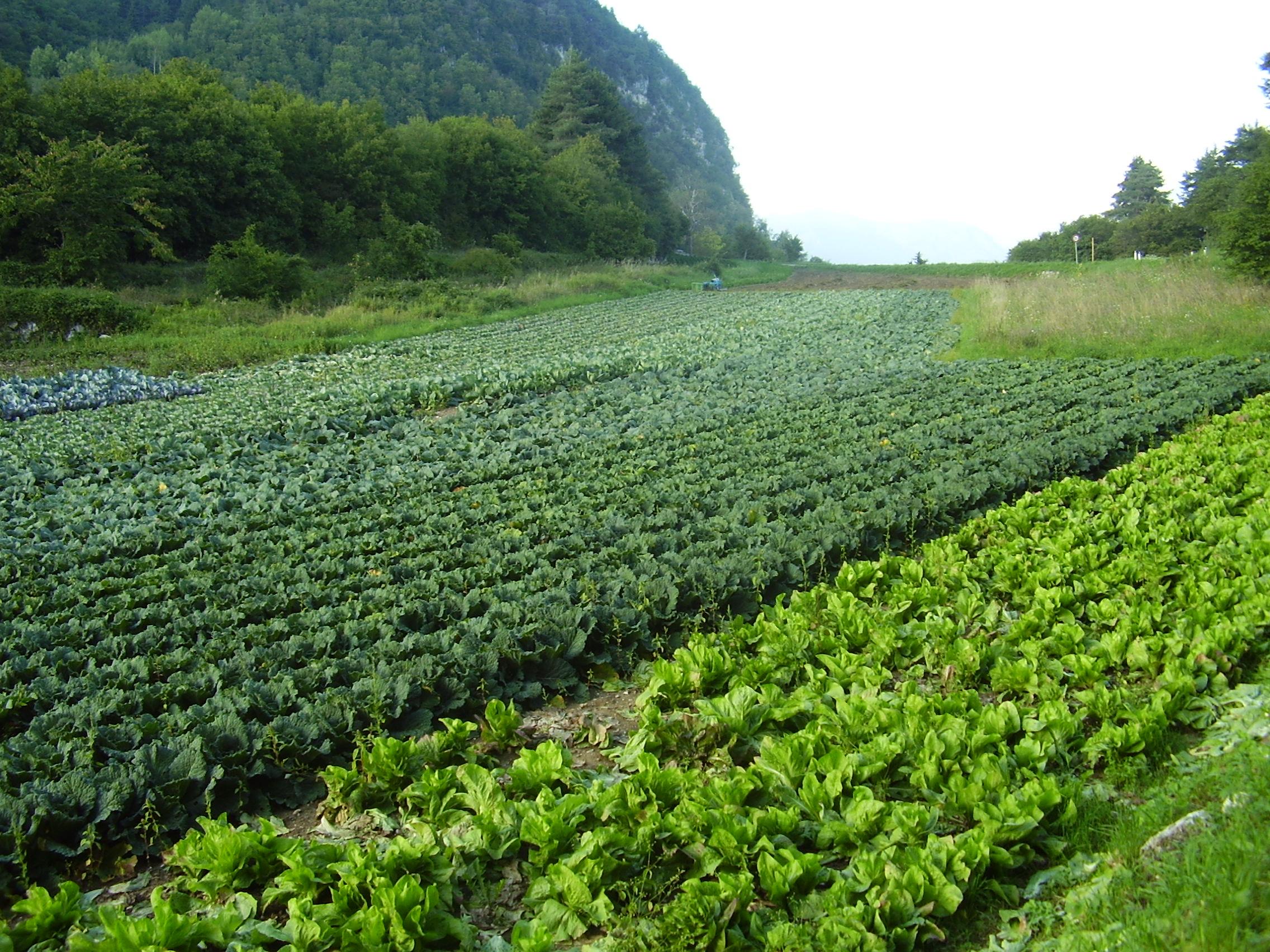 I Terreni Abbandonati Ai Giovani Agricoltori Vita Trentina