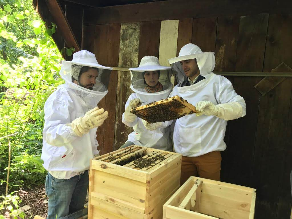 apicoltura urbana, miele